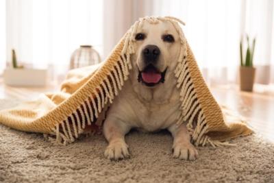 Aranżacja wnętrz przy zwierzakach domowych